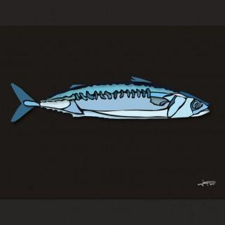 art_poissons_maquereau